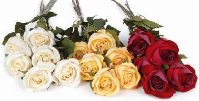 Bücher : Floristik, Blumen