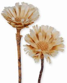 Trockenblumen ( Exoten)