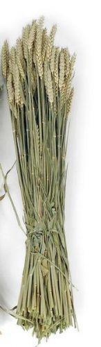 Weizen , 70 cm , Herbstdeko