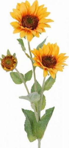 Sonnenblumen, 60 cm