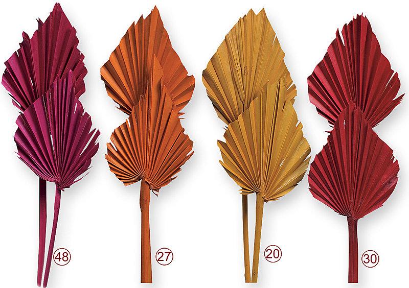 palmspeer trockenblumen zum basteln von kr nzen. Black Bedroom Furniture Sets. Home Design Ideas