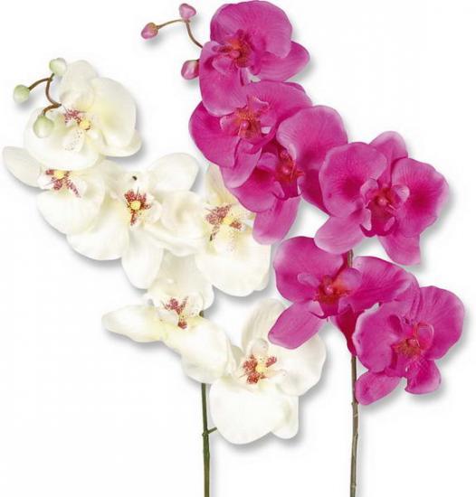 seidenblumen orchideen g nstig online kaufen. Black Bedroom Furniture Sets. Home Design Ideas