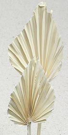 Palmspeer indisch, gebleicht, 20 Stck