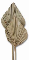 Palmspeer indisch, natur, 5 Stck