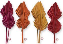 Palmspeer indisch, gefärbt, 20 Stck