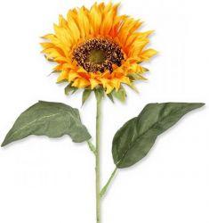 Sonnenblume, 60 cm, 2 Stck