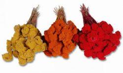 Achillea, farbig, Trockenblumen, 400 g