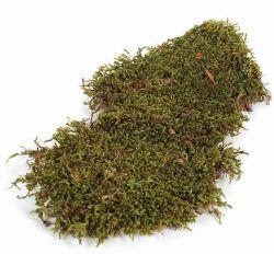 Plattenmoos, naturgrün, 1 kg